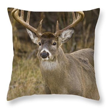 Buck Approaching Throw Pillow