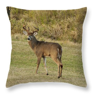 Throw Pillow featuring the photograph Buck In Field by Judy  Johnson
