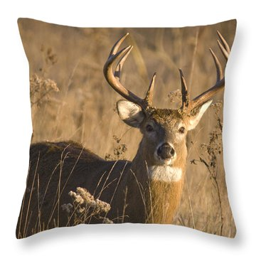 Buck In Field Throw Pillow