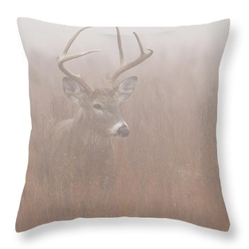 Buck In Fog Throw Pillow by Rob Graham