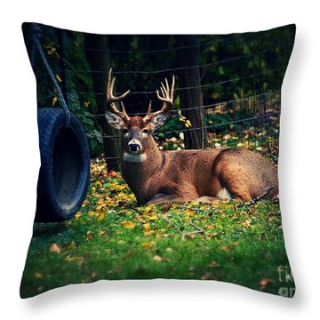 Buck In The Back Yard Throw Pillow