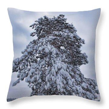 Buck Lake Flocked Pine Throw Pillow
