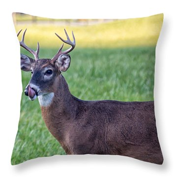 Buck Licking His Chops At Cades Cove Inside Of The Great Smoky Mountains National Park Throw Pillow