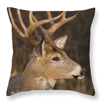 Buck Portrait Throw Pillow