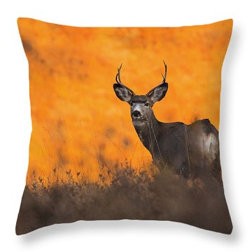 Buck Pose Throw Pillow