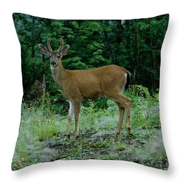 Throw Pillow featuring the photograph Buck by Rod Wiens