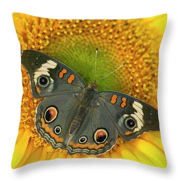 Buckeye Butterfly Throw Pillows