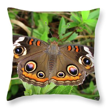 Throw Pillow featuring the photograph Buckeye Butterfly by Donna Brown