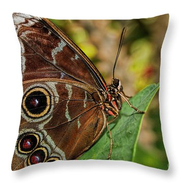 Throw Pillow featuring the photograph Blue Morpho Butterfly by Olga Hamilton