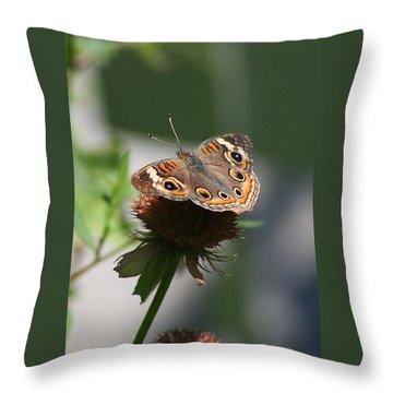 Buckeye Throw Pillow