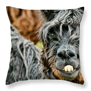 Throw Pillow featuring the photograph Bucky The Alpaca by David Lawson