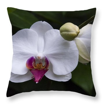 Throw Pillow featuring the photograph Bud And Bloom II by Penny Lisowski