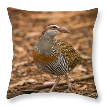 Buff-banded Rail Throw Pillow