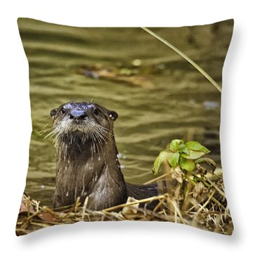 Buffalo National River Otter  Throw Pillow