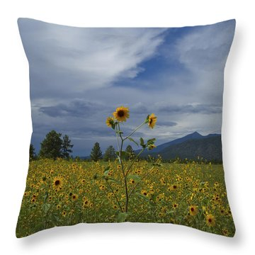 Buffalo Park 0118 Throw Pillow