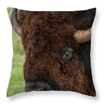 Buffalo Portrait Throw Pillow
