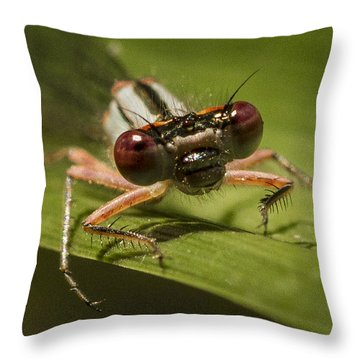 Bug Eyes Throw Pillow by Jean Noren