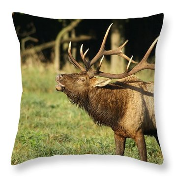 Bugleing Elk Throw Pillow