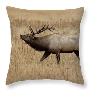 Throw Pillow featuring the photograph Bugling Bull by Daniel Behm
