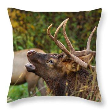 Bugling Bull Elk Throw Pillow by Patrick Shupert