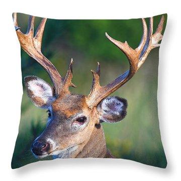 Buck Posing Throw Pillow
