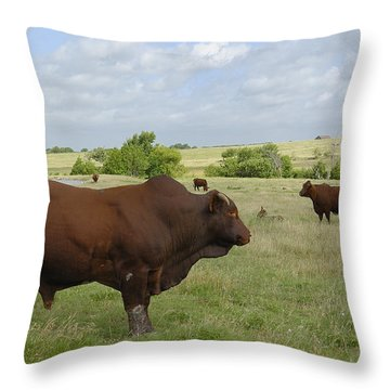 Throw Pillow featuring the photograph Bull And Cattle by Charles Beeler