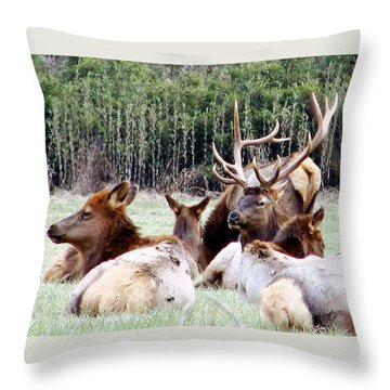 Bull Elk And His Girls 2 Throw Pillow