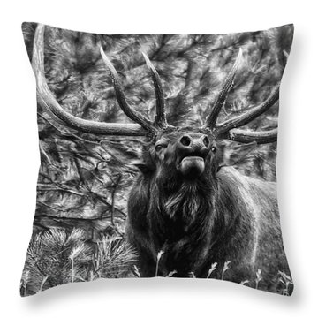 Bull Elk Bugling Black And White Throw Pillow