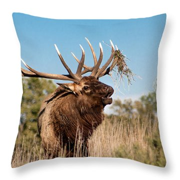 Bull Elk Call Throw Pillow