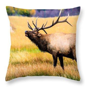 Bull Elk - Colorado Throw Pillow