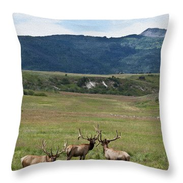 Bull Elk In Velvet Ver 2 Throw Pillow by Daniel Hebard