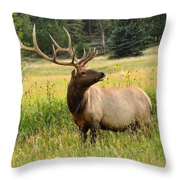 Bull Elk In Wildflowers Throw Pillow