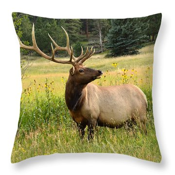 Bull Elk In Wildflowers Throw Pillow