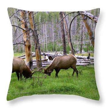 Bull Elk Sparing Throw Pillow