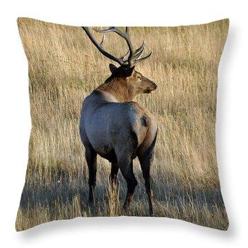 Bull Elk Surveying His Harem Throw Pillow by Bruce Gourley