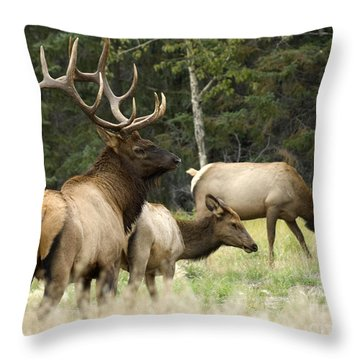 Bull Elk With His Harem Throw Pillow