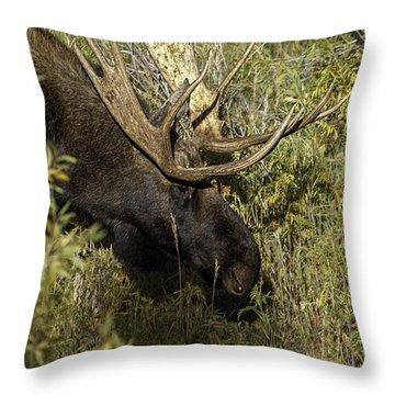 Bull Moose 1 Throw Pillow