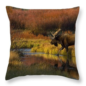 Bull Moose Throw Pillow by Thomas and Pat Leeson