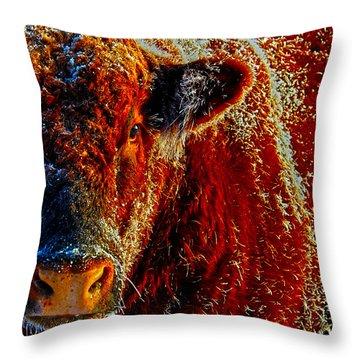 Bull On Ice Throw Pillow