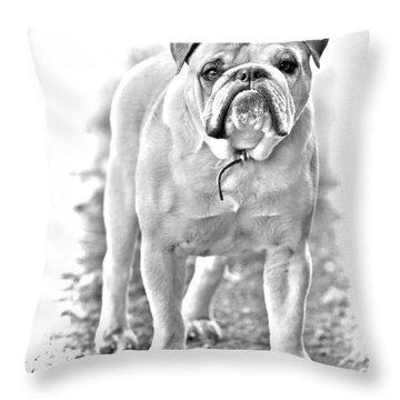 Bulldog Throw Pillow by James BO  Insogna