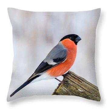 Bullfinch On The Edge Throw Pillow