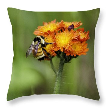 Bumble And Hawk Throw Pillow