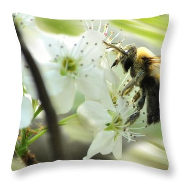 Bumble Bee On Flower Throw Pillow by Dan Friend
