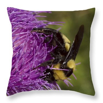Bumble Bee On Thistle Throw Pillow by Shelly Gunderson