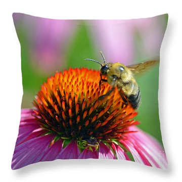 Bumblebee On A Coneflower Throw Pillow