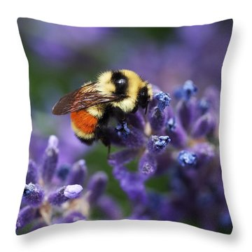 Bumblebee On Lavender Throw Pillow by Rona Black