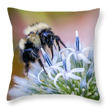 Bumblebee On Thistle Blossom Throw Pillow by Marty Saccone