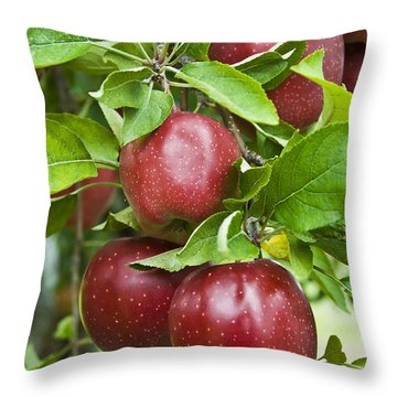 Bunch Of Red Apples Throw Pillow by Anthony Sacco