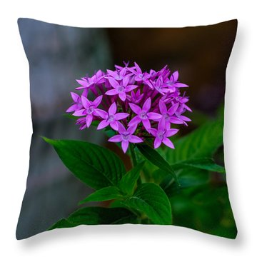 Bundle Of Joy Throw Pillow