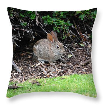 Throw Pillow featuring the photograph Bunny In Bush by Debra Thompson